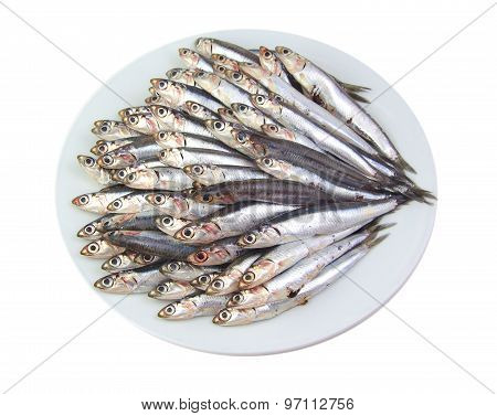 Mediterranean anchovies isolated on a white background