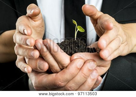 Male And Female Business Partners Nurturing A New Plant United To Protect A Green Fragile Sprout