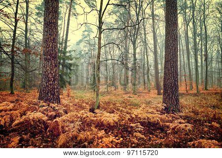 Vintage photo of autumn forest
