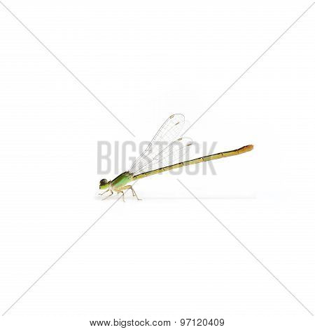 Dragonfly Sideview Isolate On White Background