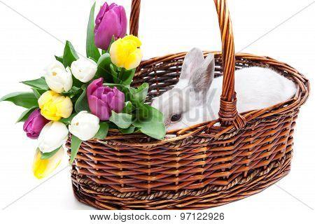 White Rabbit In A Basket