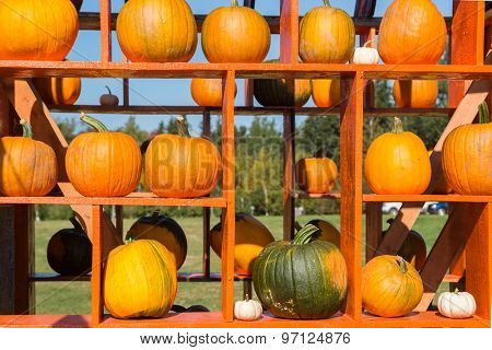 A harvest arrangement of farm fresh pumpkins.