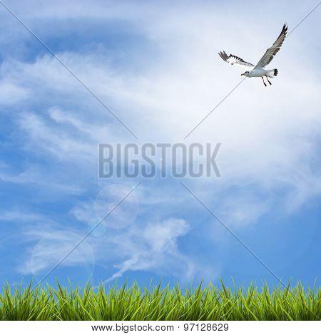Grass Grass Under Blue Sky, Clouds And Bird