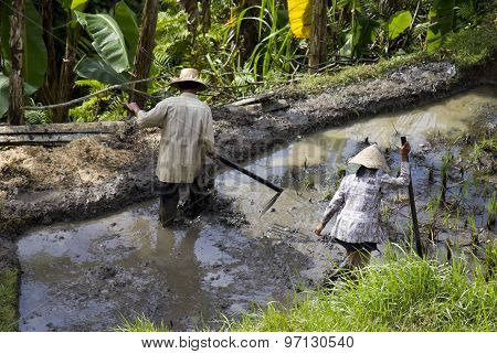 People Working In A Paddy Field
