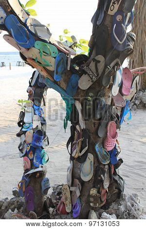 Flip Flops Hung On A Tree