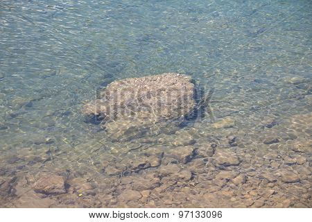 Image large rock on the river bottom