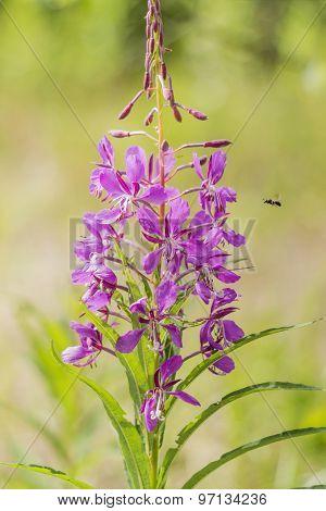 Open Flower Willow Tea