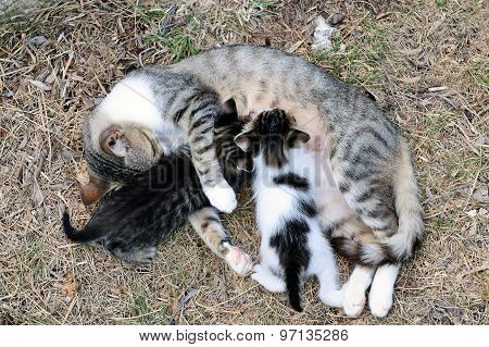 Female Cat With Kittens