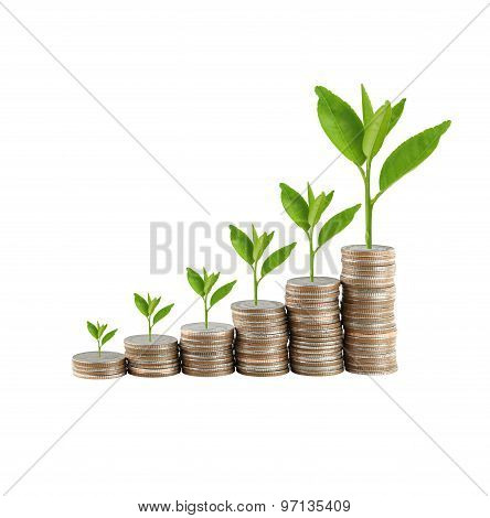 Silver Coin Stack And Treetop In Concept Of Business Growth.