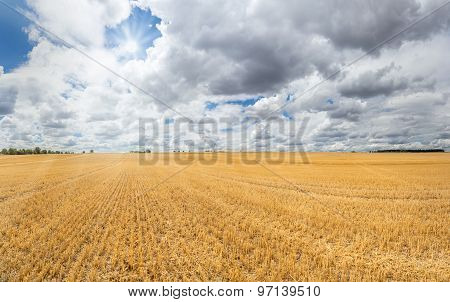Large golden yellow stubble field