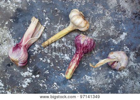 Fresh raw garlic on rustic iron background.