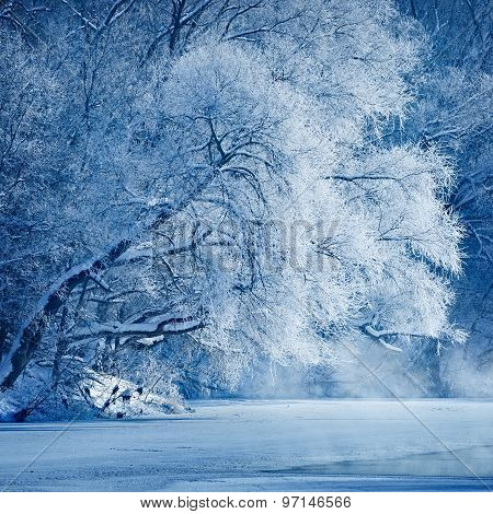Trees Covered With Hoarfrost On The Shores Of An Icy River.