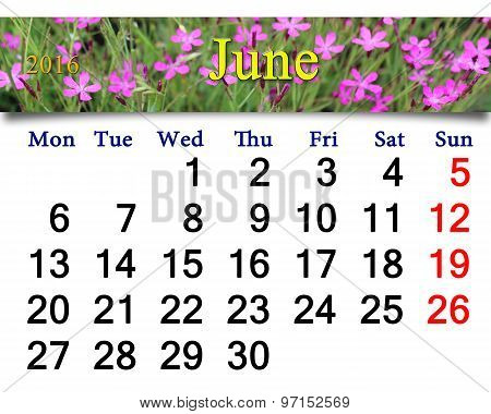 Calendar For June 2016 With Image Of Wild Carnation