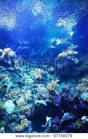 Small tropical fish on a coral reef