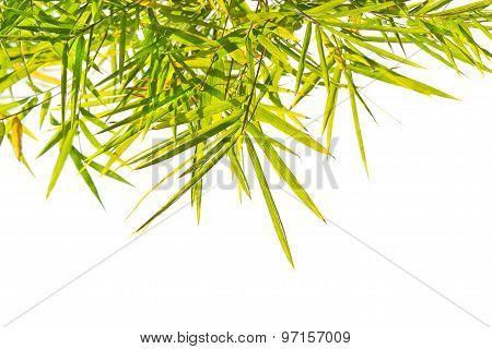 Green Bamboo leaf on white background border