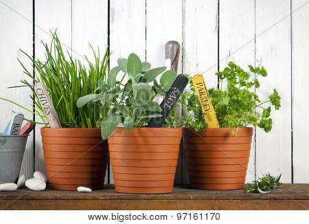 chives, sage and parsley in pots with flower tags on shelf