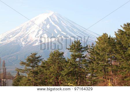 Mount Fuji And Green Pine Trees.