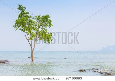 lonely tree on the  Sea
