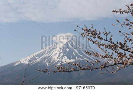 Cherry Blossoms Is Not Blooming And View Of Mount Fuji.