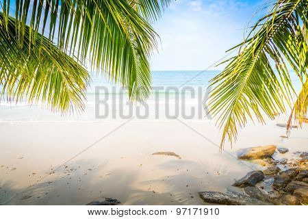 Palm leaf and tropical beach
