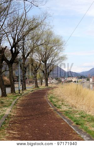 Trees In Kawaguchiko Lakeside.