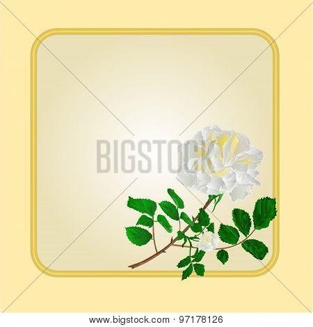 Golden Frame With White Rose Vector