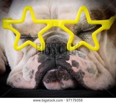famous dog - bulldog wear yellow star glasses