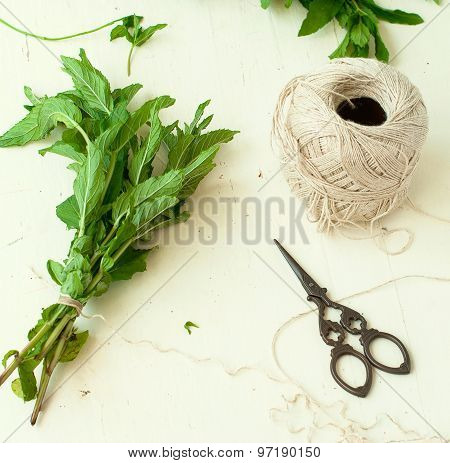 Mint Bunch Tied With A Rope