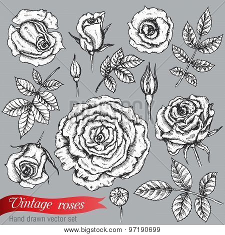 Set of roses  and leaves, hand drawn vector illustration