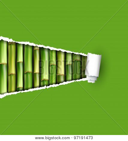 Green Bamboo Grove With Ripped Paper Frame Isolated On White