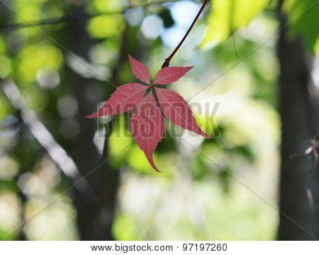 autumn leaf on blurred background