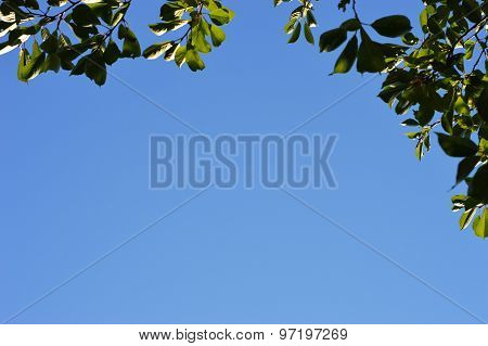frame of leaves against the blue sky