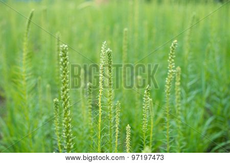 Clump Of Green Wild Grass On The Field.