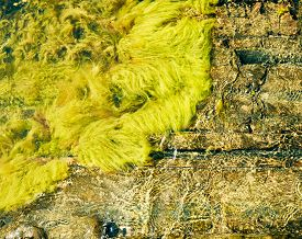 picture of algae  - Live algae waves and rocks archipelago shoreline in scandinavia  - JPG