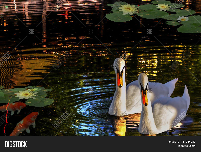 Лебеди и рыбки