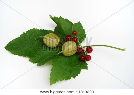 Gooseberry And Red Currant