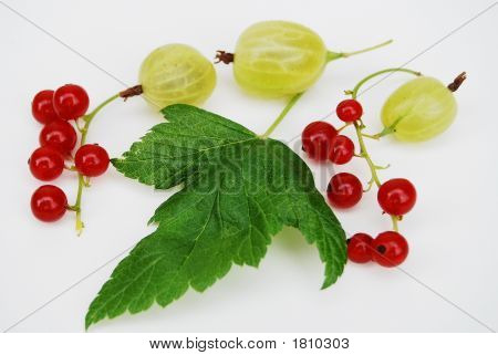 Gooseberry And Red Currant 2