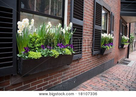 Urban Window Garden