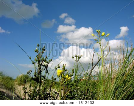 Flowers, Dunes And Clouds