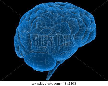 Cérebro de fio