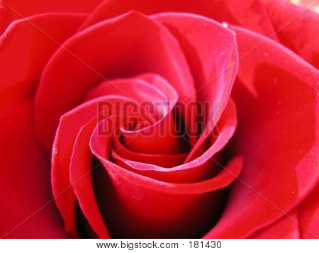 Red Rose , The Heart