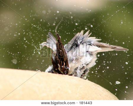 Bird At Bath