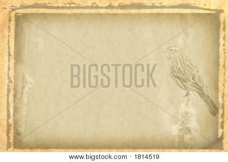 Vintage Background With Bird