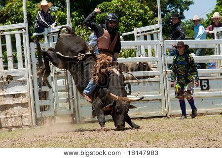 Cowboy Rides Dangerous Bull On Australia Day Rodeo Festival