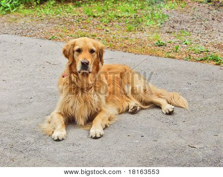 A dog lying on the pavement