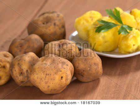 Peruvian Yellow Potato