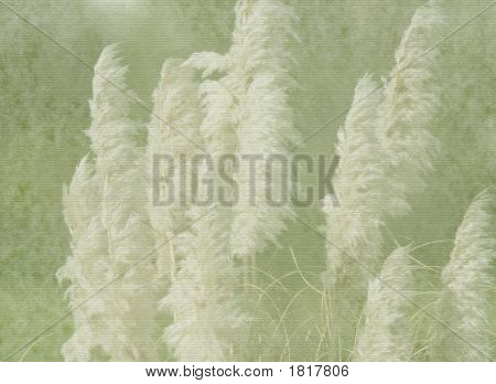 Pampas Grass On Vintage Texture