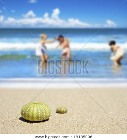 Strand-Szene mit zwei Dead Sea Urchin Schalen
