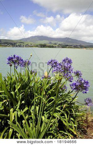 Raglan, North Island, New Zealand