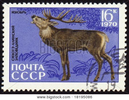 Siberian Stag On Post Stamp